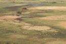 Puku herd, Busanga Plains, Zambia