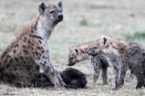 Hyena family, Serengeti