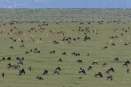 Wildebeest and eland herds in the southern Serengeti